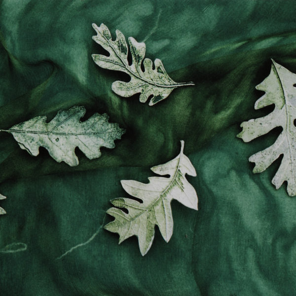 leaves-bg